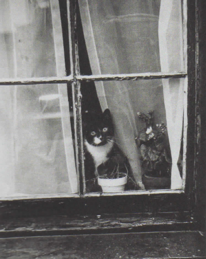 Photograph of a cat by Alfred & Betty Statler